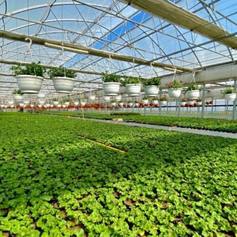 Rastlinjak vrtnarstvo Iris