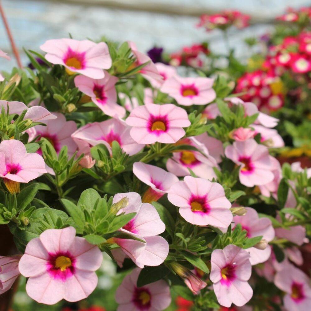 Vrtnarstvo Iris