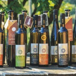 Degustacija vrhunskih vin Kaloh