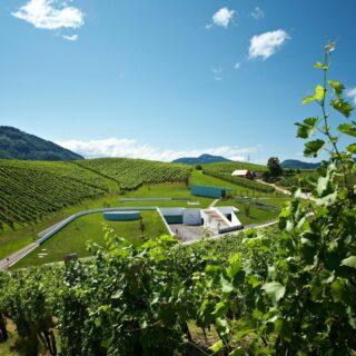 Vinska pravljica - Zlati Grič